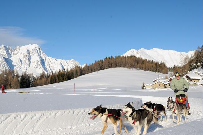 Sled dog team in Italian Alps