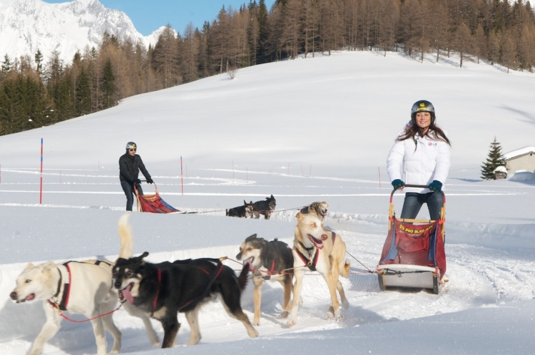 Sled dogs and rider